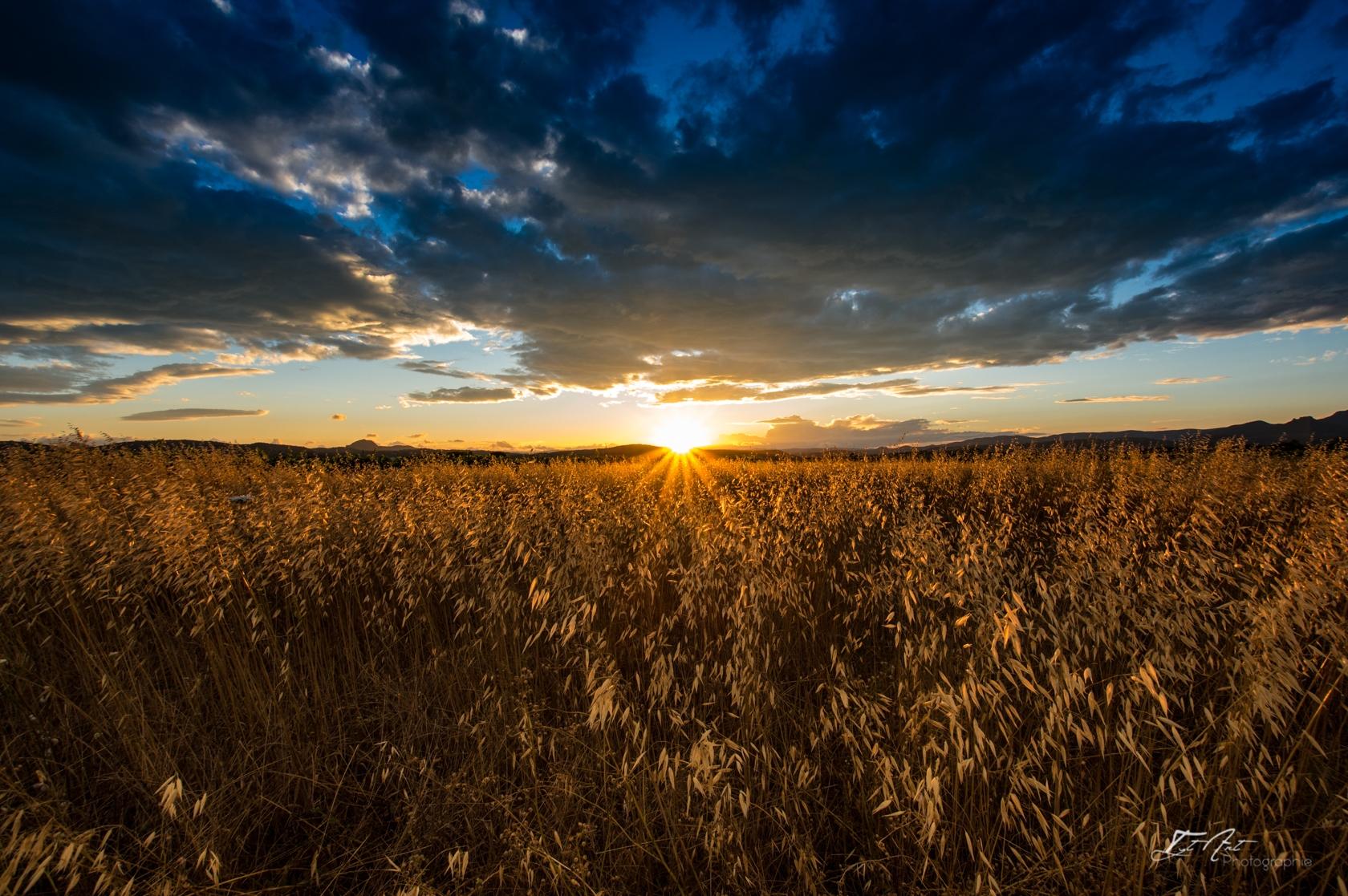 champ blé soleil